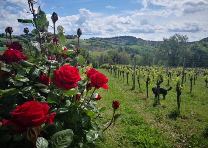 visite in cantina connubio di vino